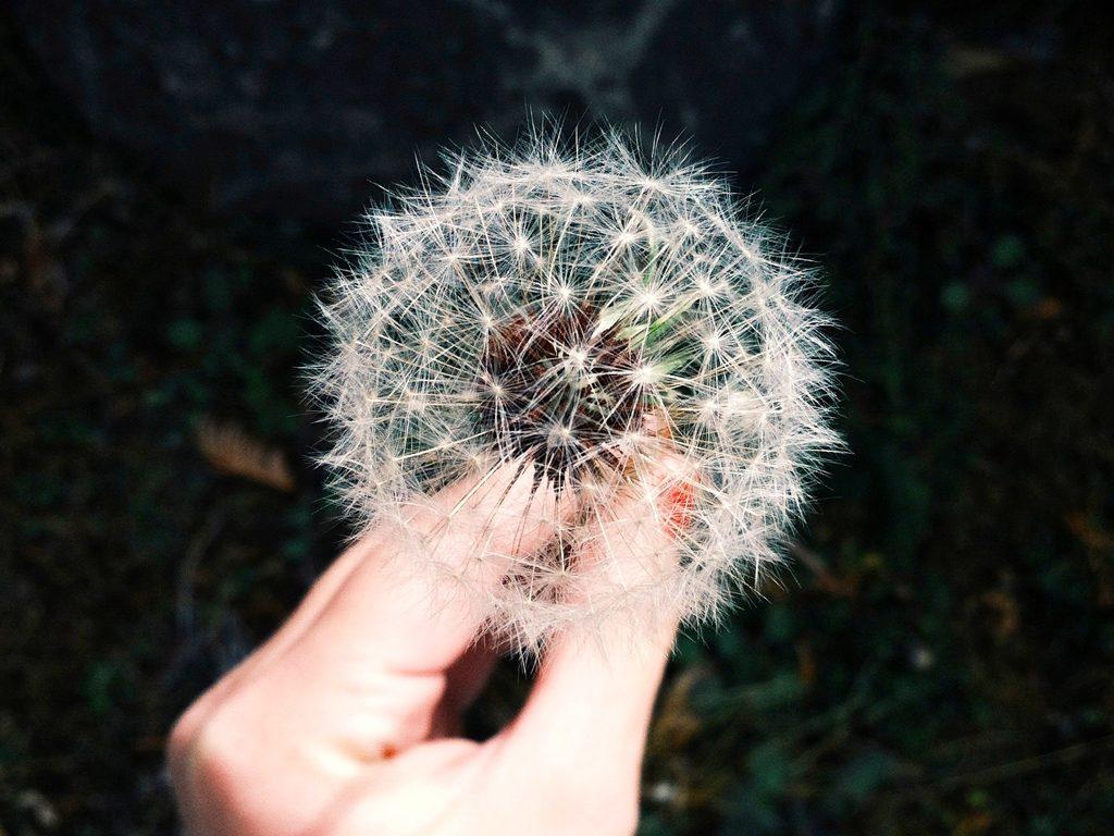 Esprimi un desiderio…e poi agisci!