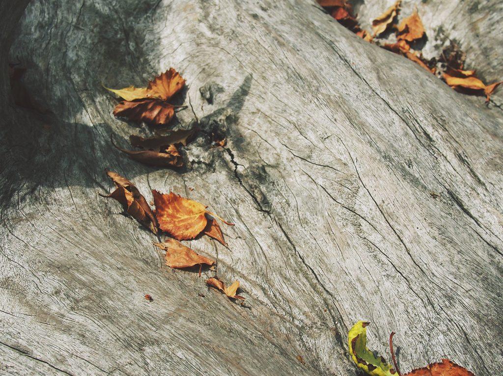Il ritmo delle stagioni nel business: l'autunno