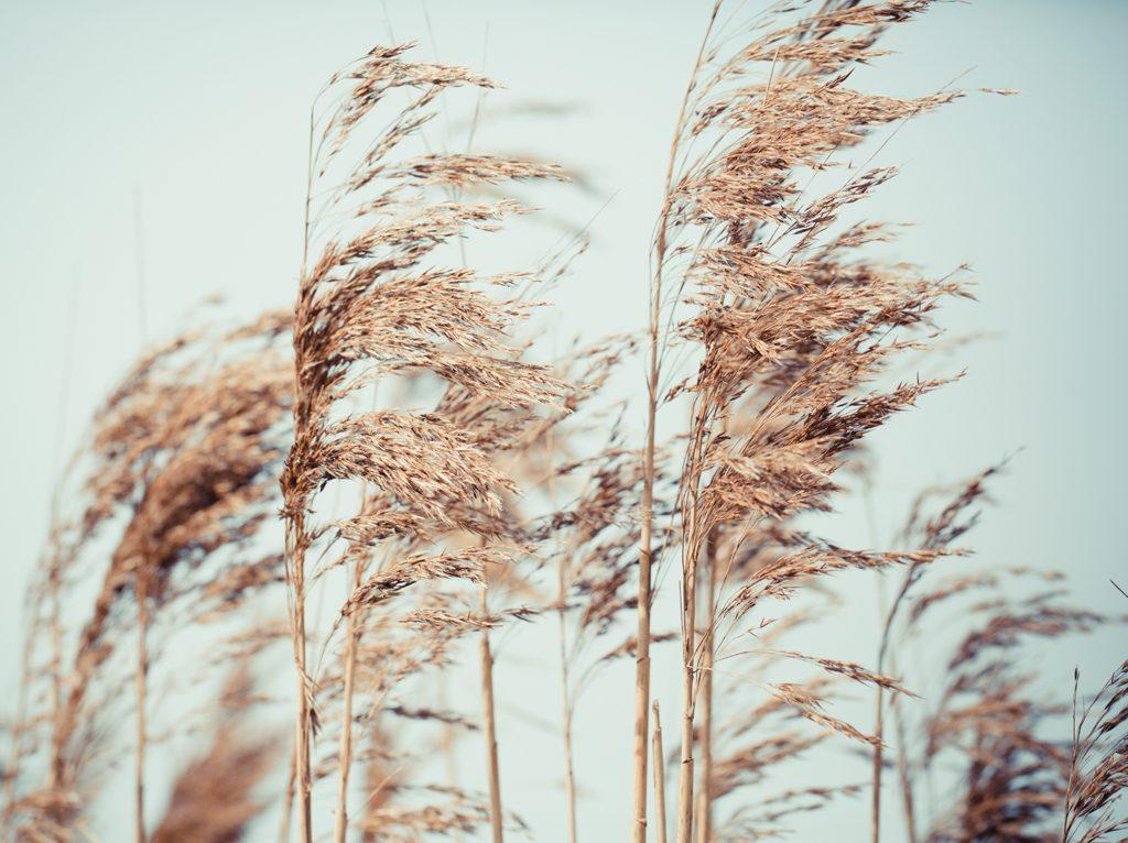 Le rythme des saisons dans le business: l'été